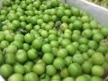 Green Sour Plums w Fresh Chickpeas 4-22-14