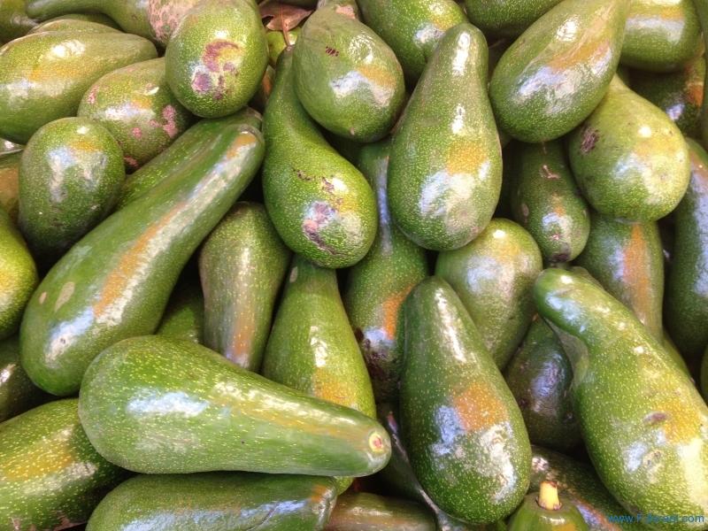 Avocado 8-9-13