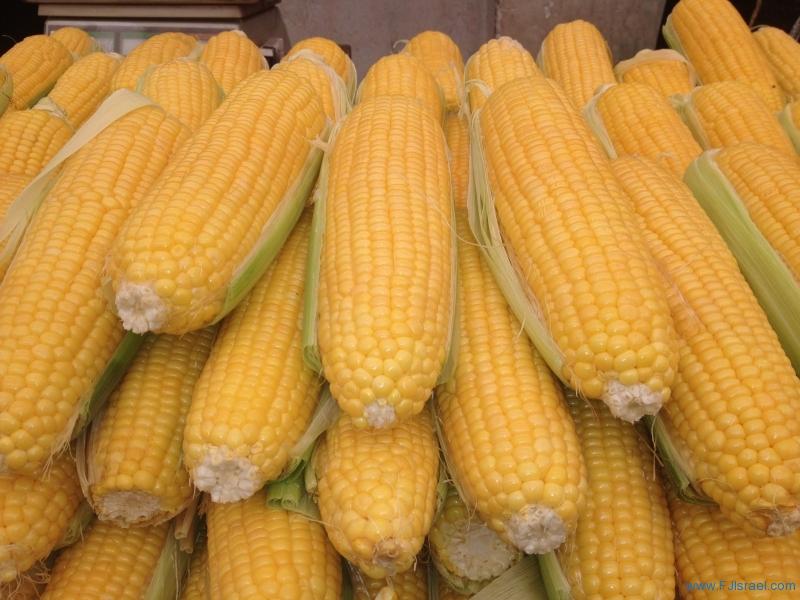 Corn 6-21-13