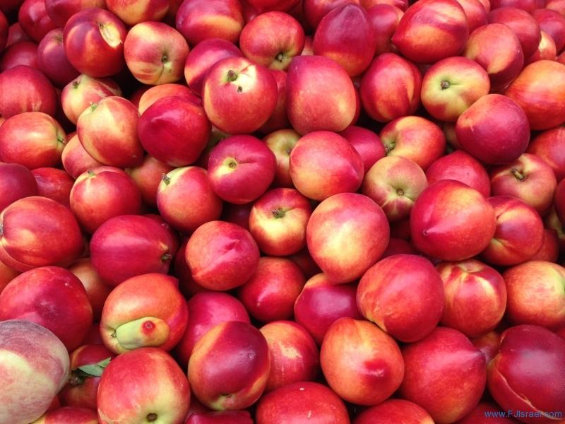 Nectarines 5-10-13