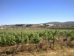 Tanya Winery vinyeards. Ofra. Fun Joel Israel Tour Guide.
